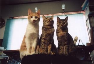 Cats1yearold640w