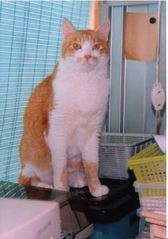 Orangecat1999640h_1