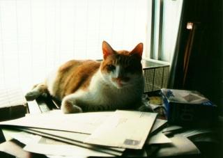 Orangecat640w