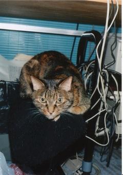 Smallcat1999640h