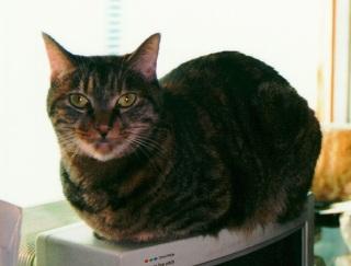 Smallcat2640w