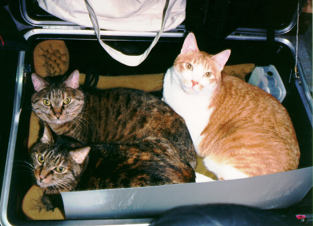 Cats_in_the_box640w